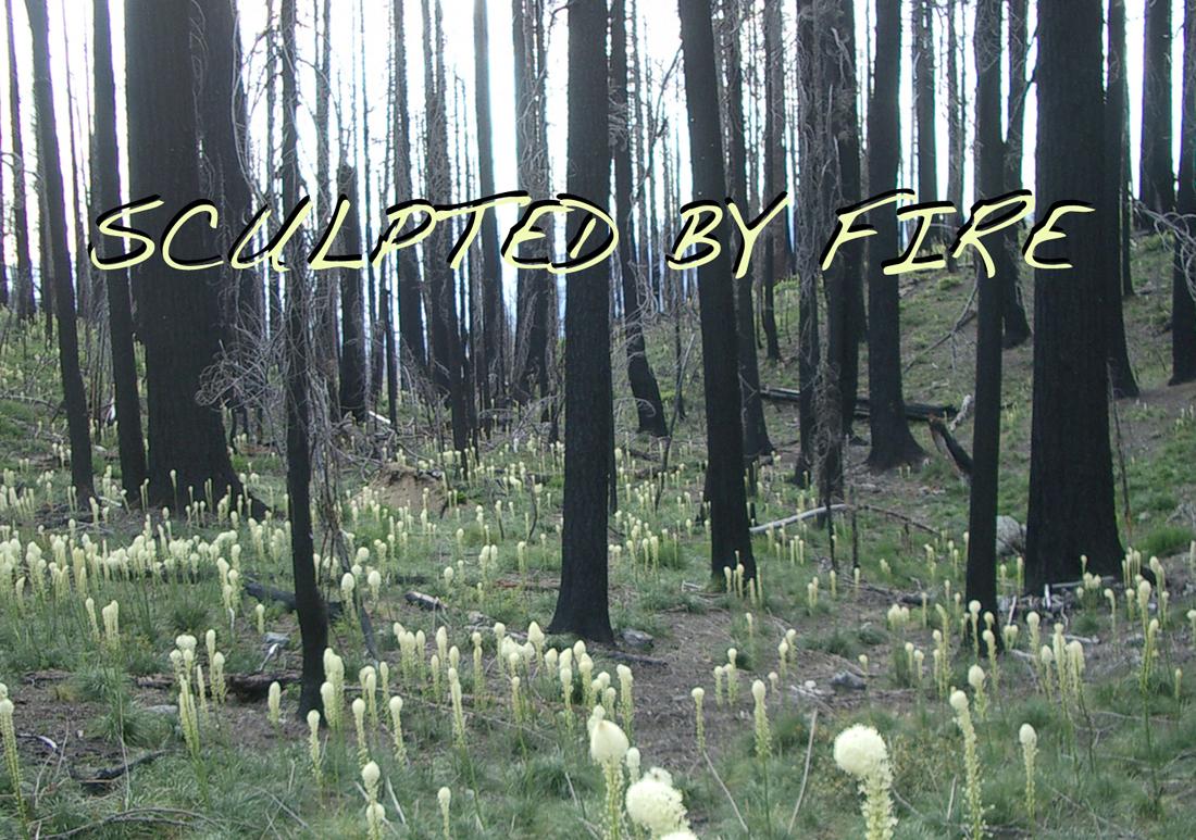 Sculptedbyfire page image